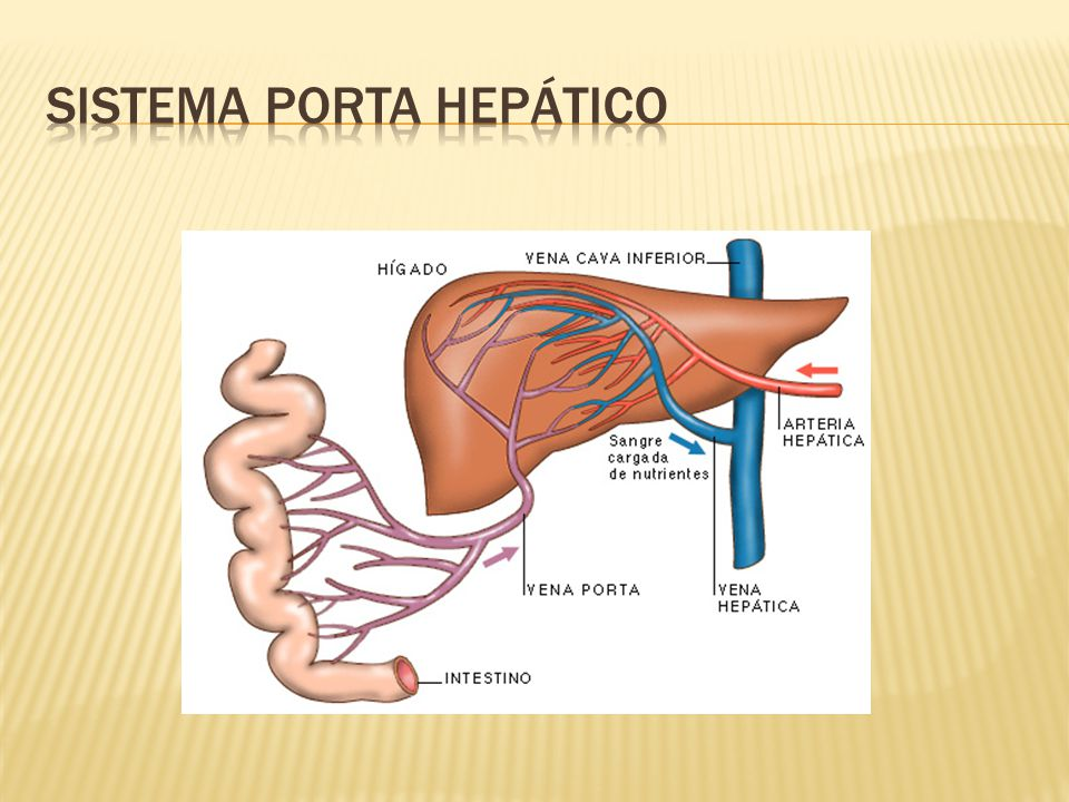 Sistema porta hepático