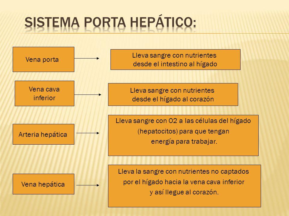 Sistema porta hepático: