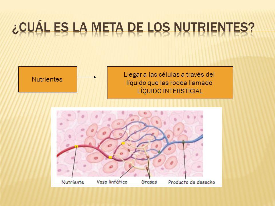 ¿Cuál es la meta de los nutrientes