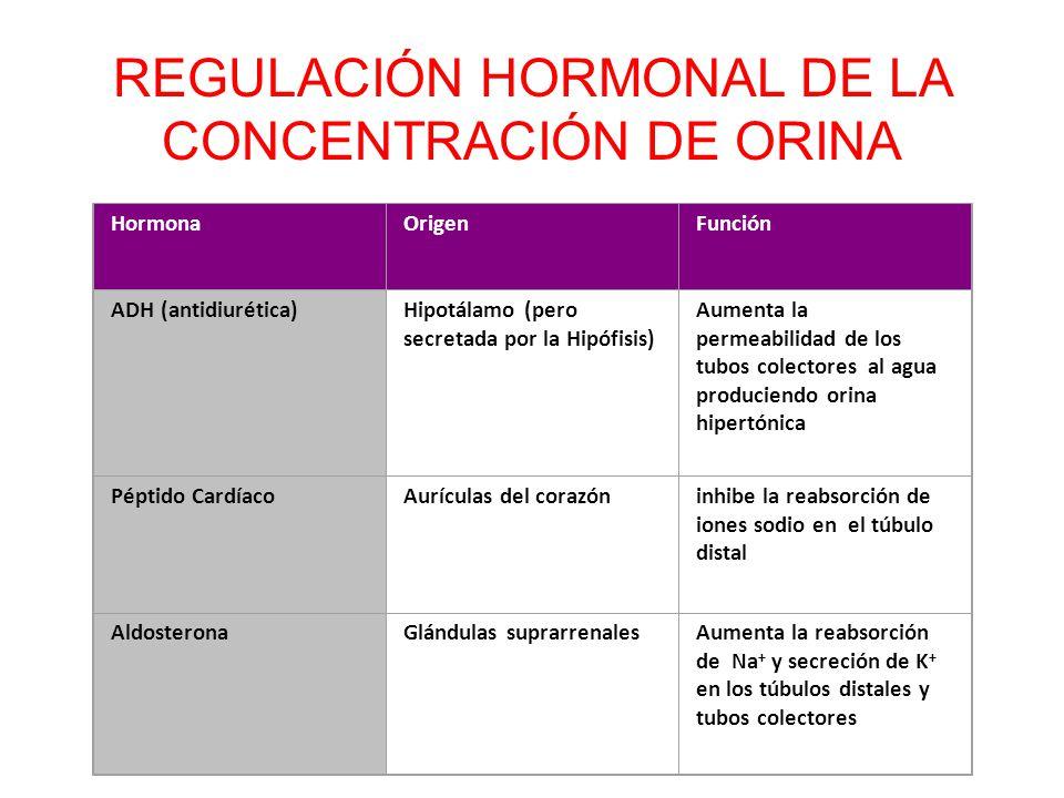 REGULACIÓN HORMONAL DE LA CONCENTRACIÓN DE ORINA