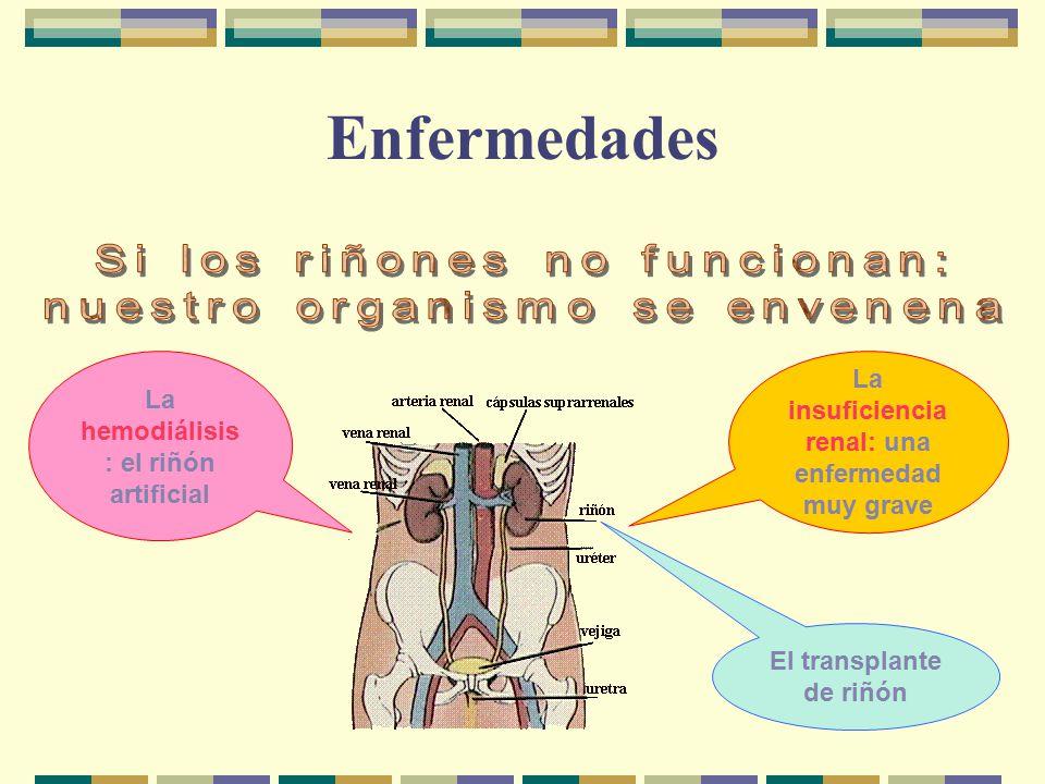 Enfermedades Si los riñones no funcionan: