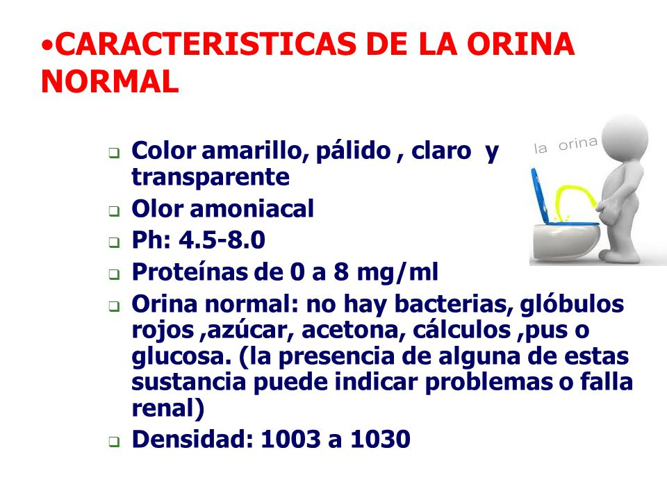 CARACTERISTICAS DE LA ORINA NORMAL