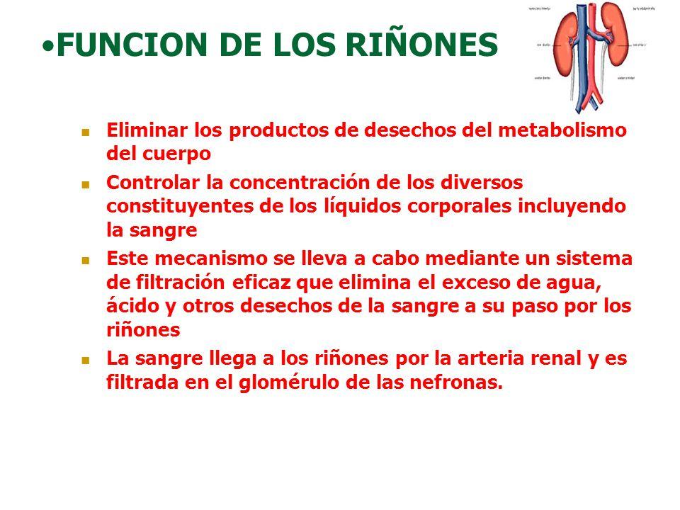 FUNCION DE LOS RIÑONES Eliminar los productos de desechos del metabolismo del cuerpo.