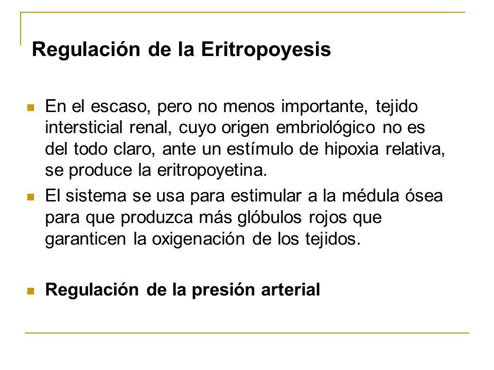 Regulación de la Eritropoyesis