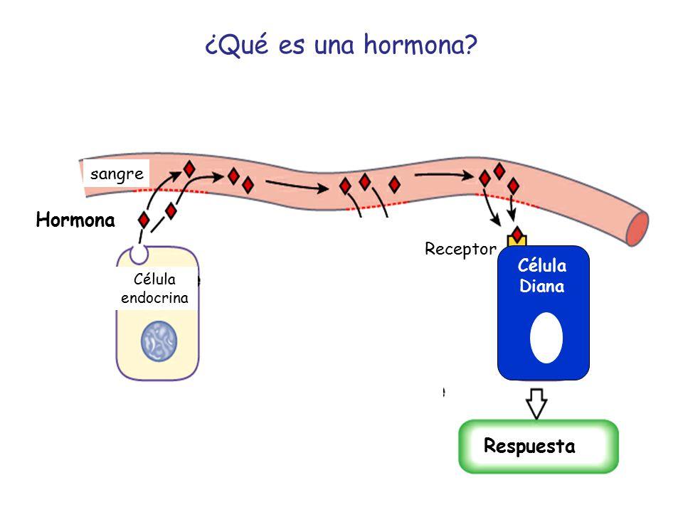 ¿Qué es una hormona Hormona Respuesta sangre Receptor Célula Diana