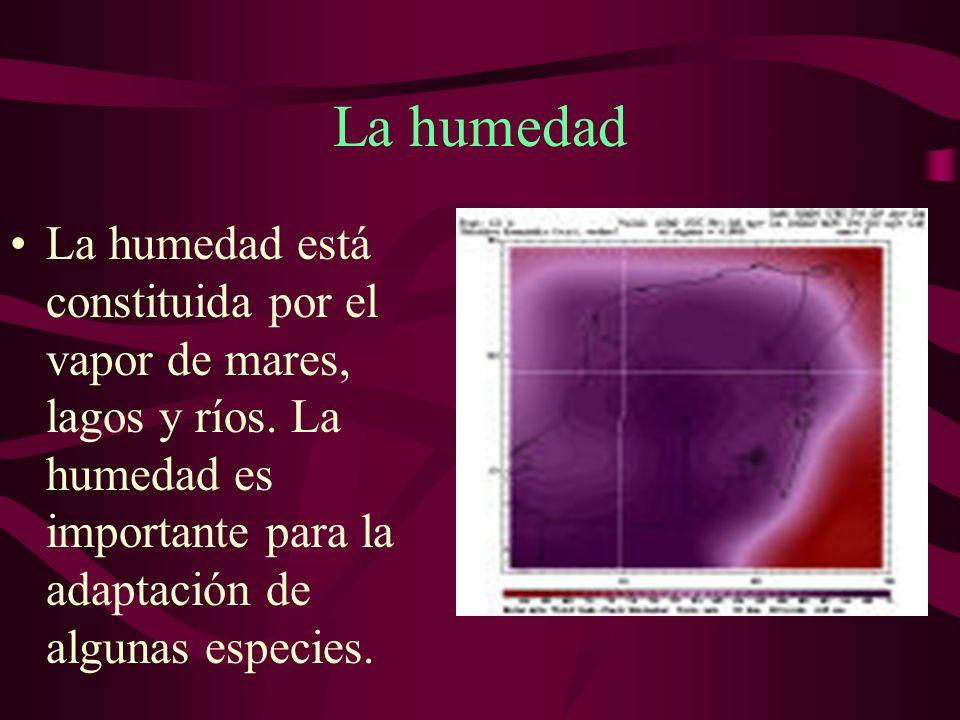 La humedadLa humedad está constituida por el vapor de mares, lagos y ríos.