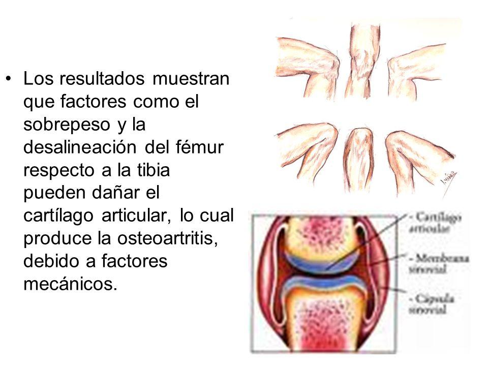 Los resultados muestran que factores como el sobrepeso y la desalineación del fémur respecto a la tibia pueden dañar el cartílago articular, lo cual produce la osteoartritis, debido a factores mecánicos.