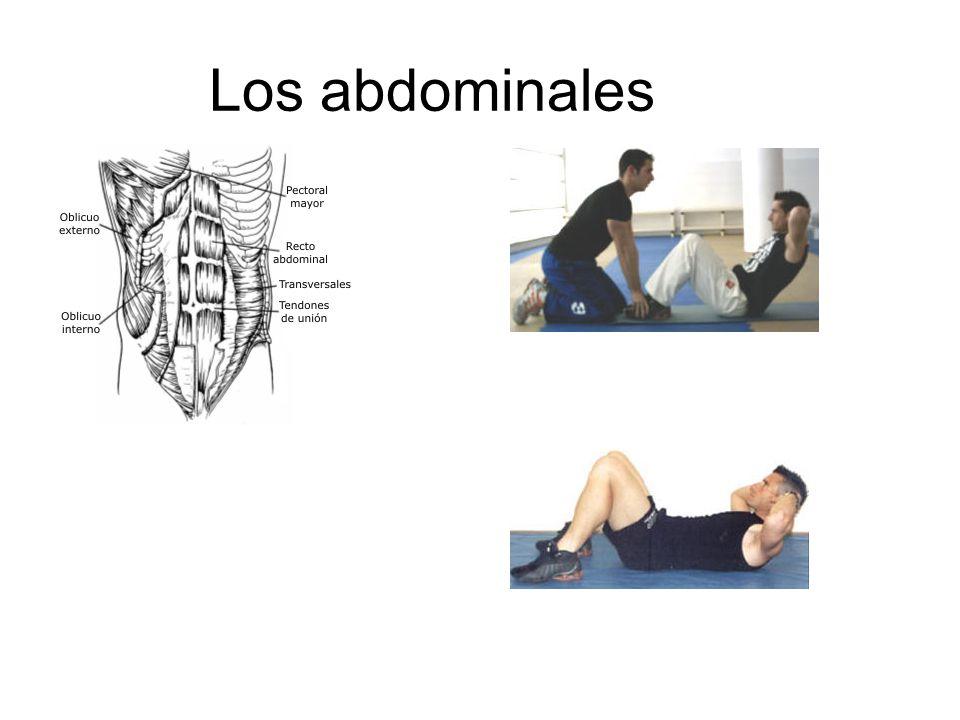 Los abdominales
