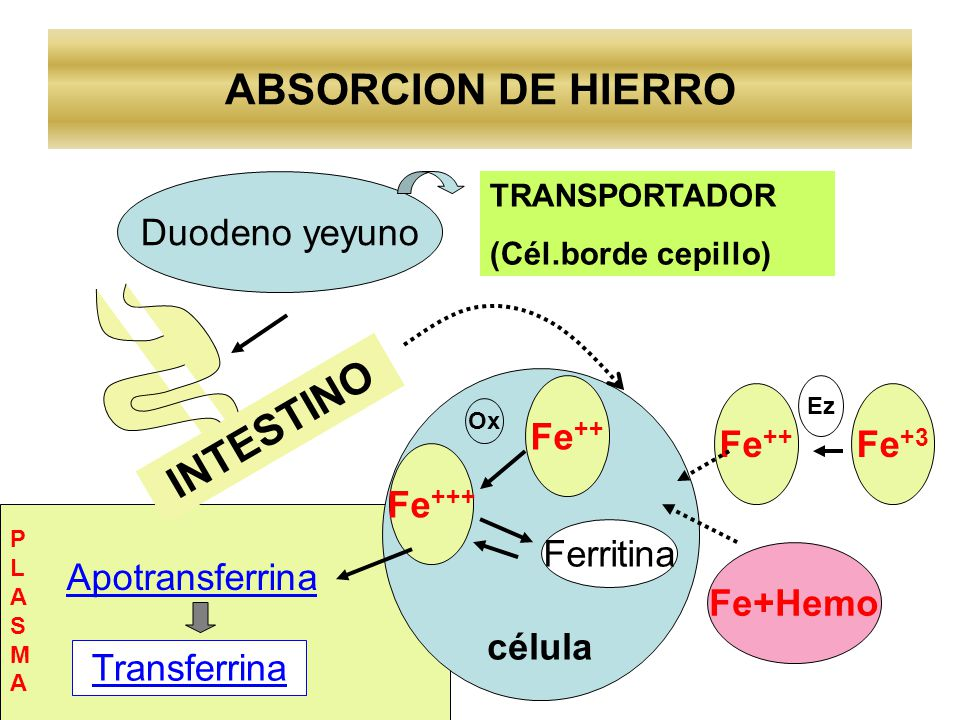 ABSORCION DE HIERRO INTESTINO