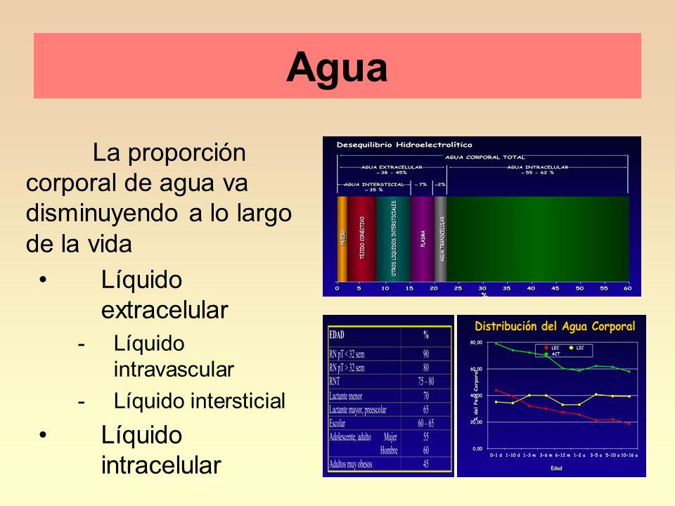 Agua La proporción corporal de agua va disminuyendo a lo largo de la vida. Líquido extracelular.