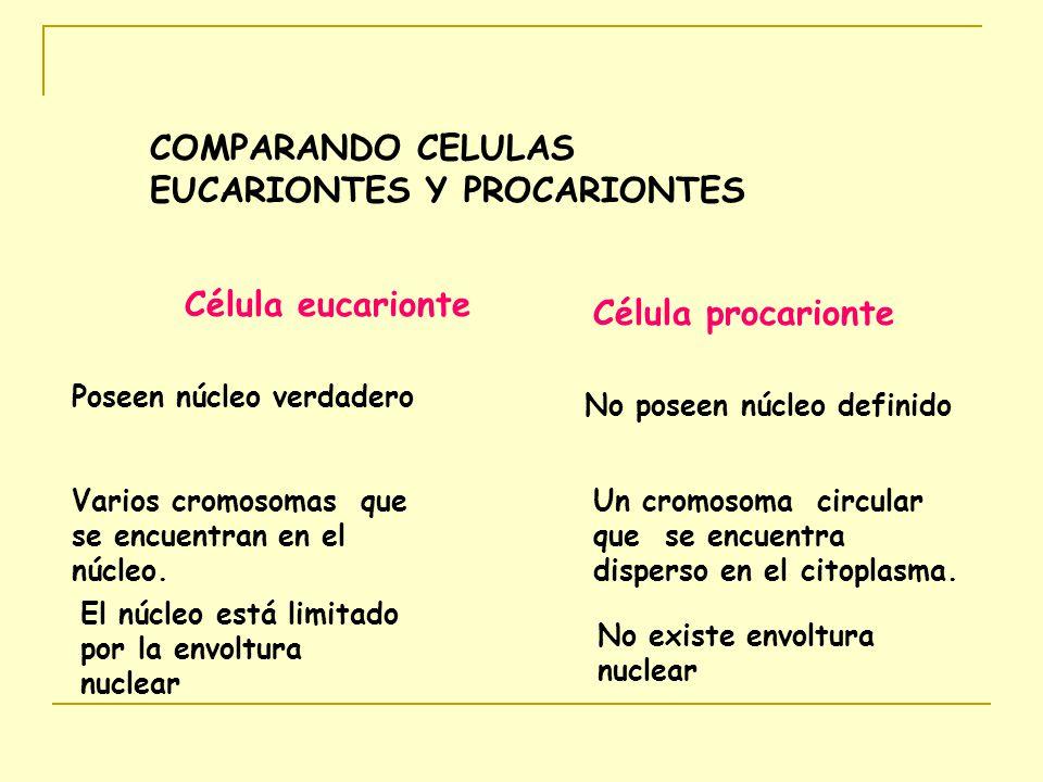 COMPARANDO CELULAS EUCARIONTES Y PROCARIONTES