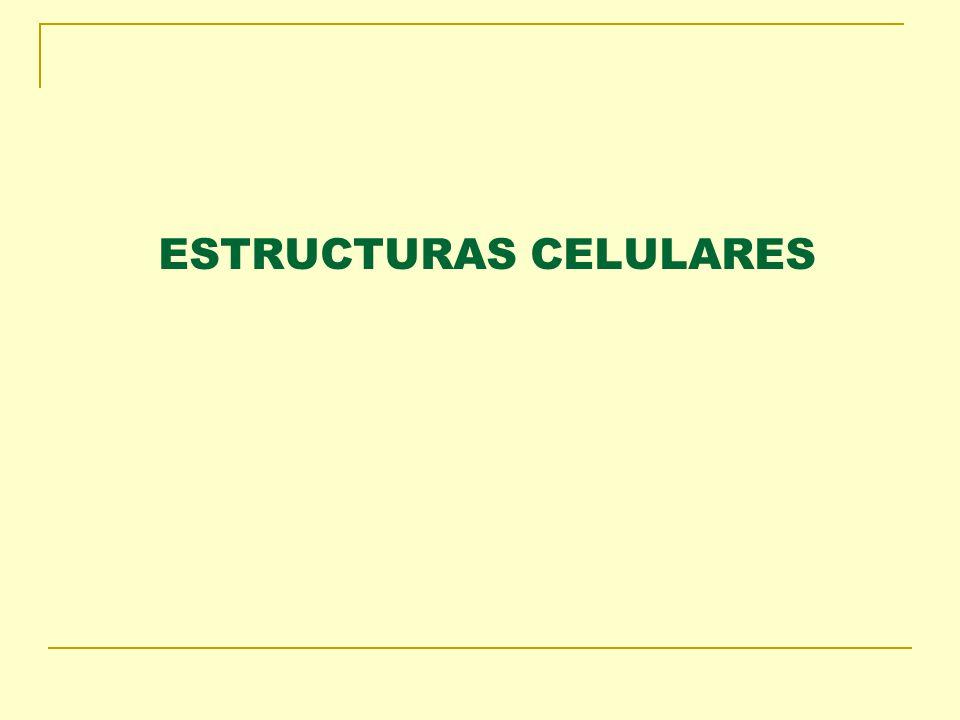 ESTRUCTURAS CELULARES