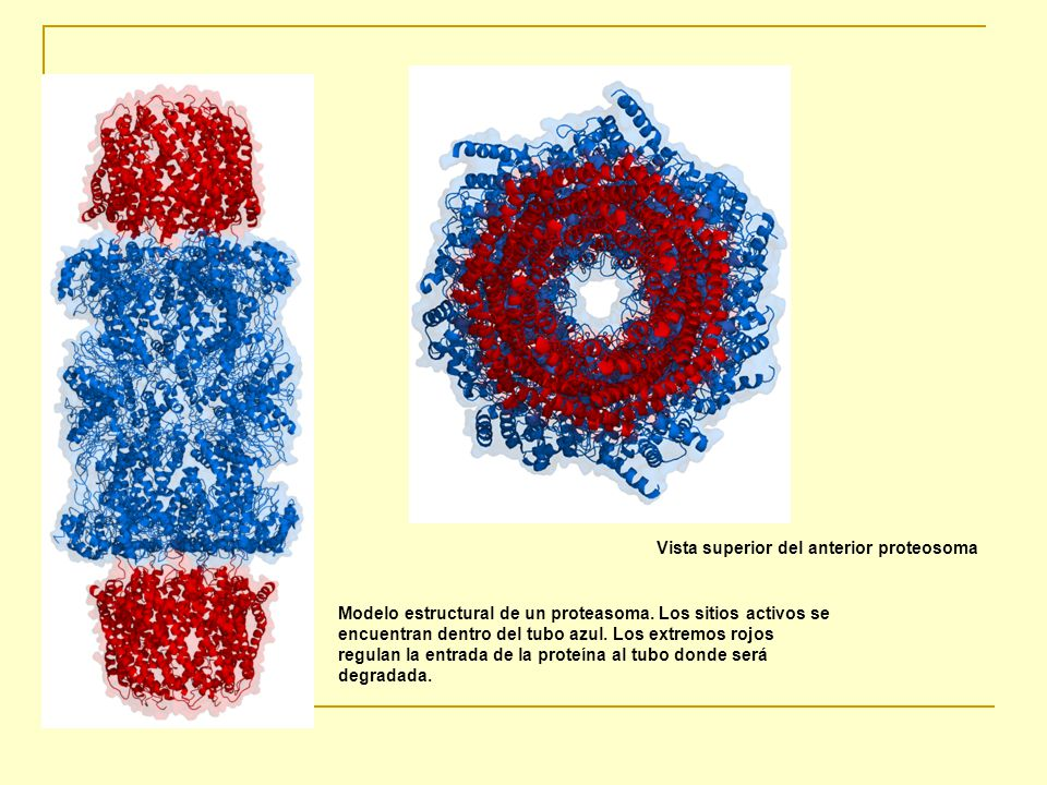 Vista superior del anterior proteosoma