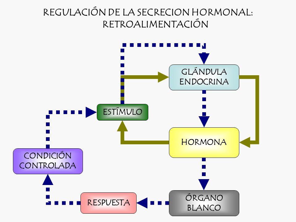 REGULACIÓN DE LA SECRECION HORMONAL: RETROALIMENTACIÓN