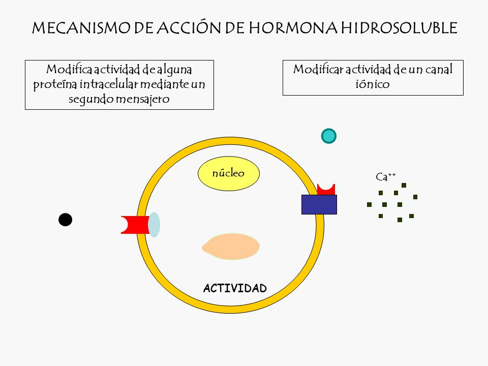 MECANISMO DE ACCIÓN DE HORMONA HIDROSOLUBLE