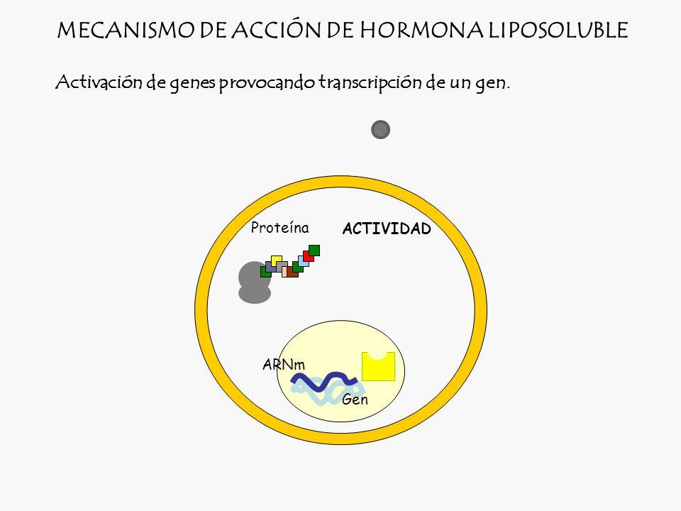 MECANISMO DE ACCIÓN DE HORMONA LIPOSOLUBLE
