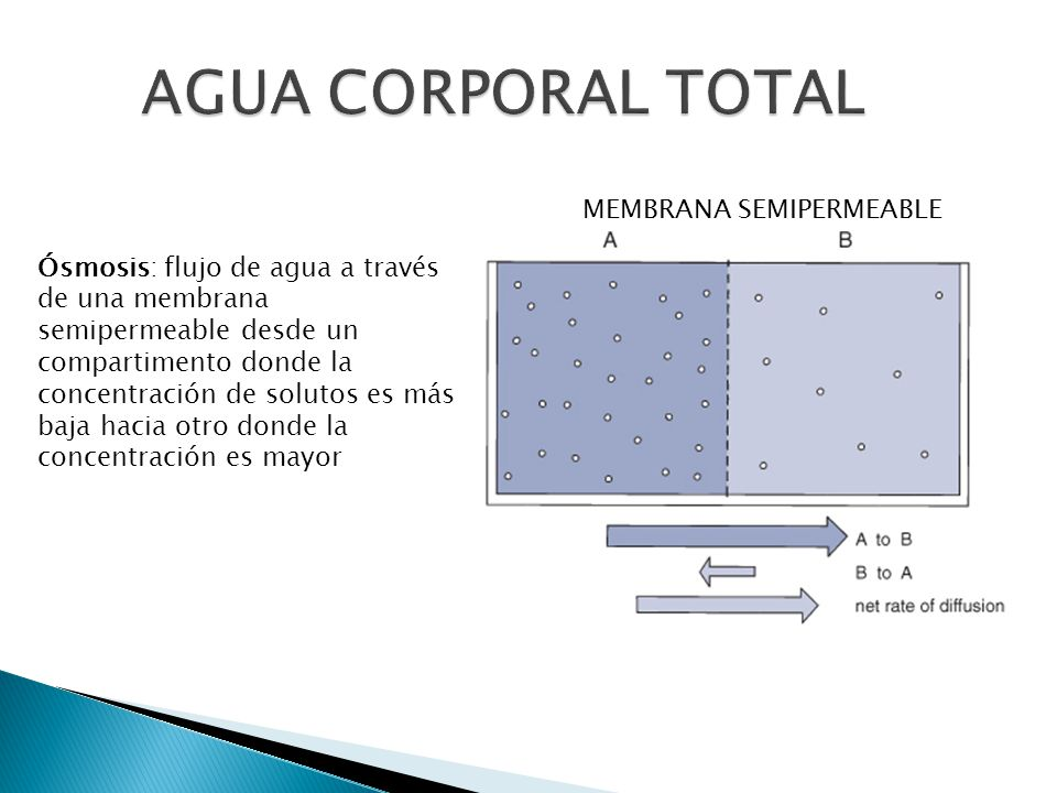 AGUA CORPORAL TOTAL MEMBRANA SEMIPERMEABLE