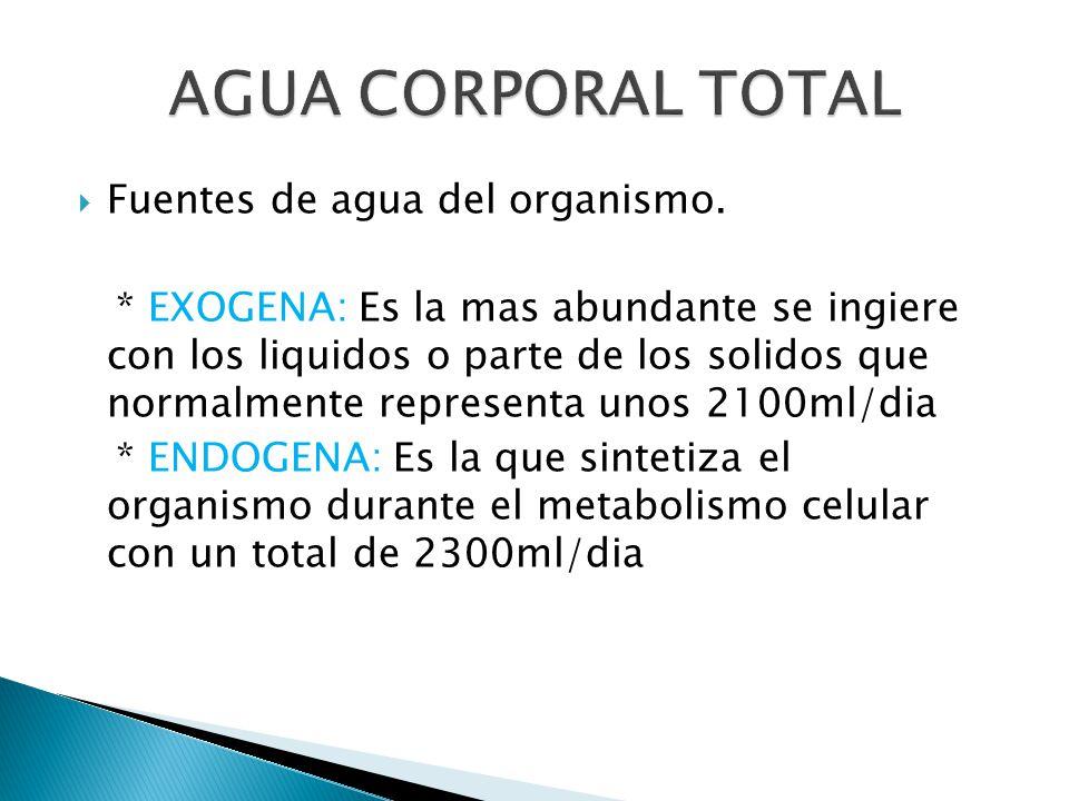 AGUA CORPORAL TOTAL Fuentes de agua del organismo.