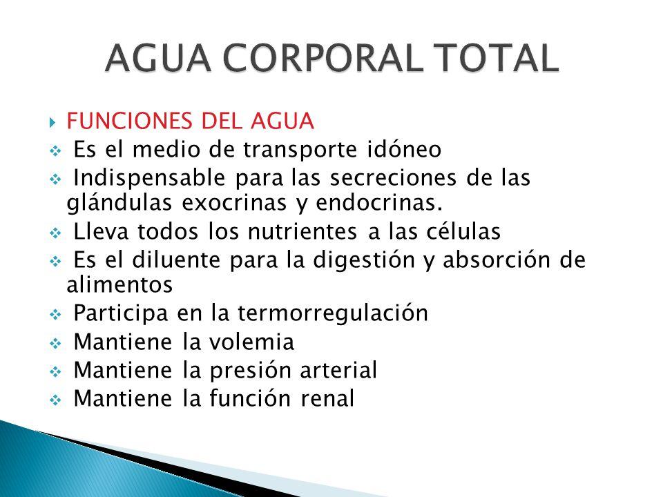 AGUA CORPORAL TOTAL FUNCIONES DEL AGUA