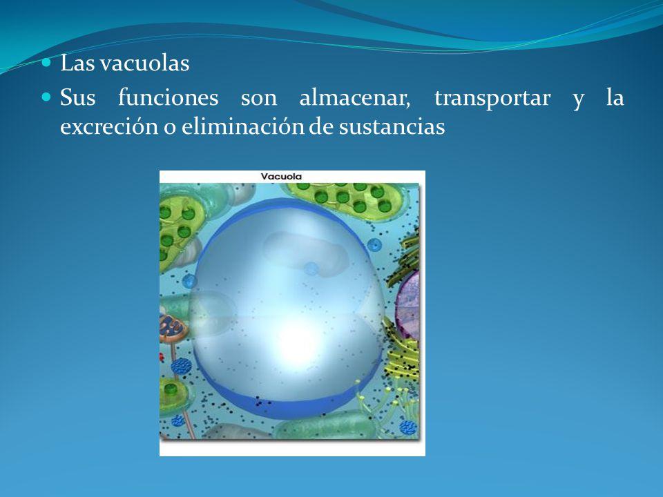 Las vacuolas Sus funciones son almacenar, transportar y la excreción o eliminación de sustancias