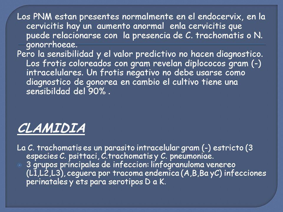 Los PNM estan presentes normalmente en el endocervix, en la cervicitis hay un aumento anormal enla cervicitis que puede relacionarse con la presencia de C. trachomatis o N. gonorrhoeae.
