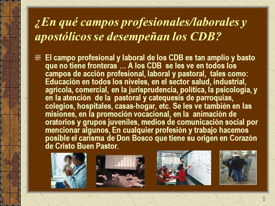 ¿En qué campos profesionales/laborales y apostólicos se desempeñan los CDB