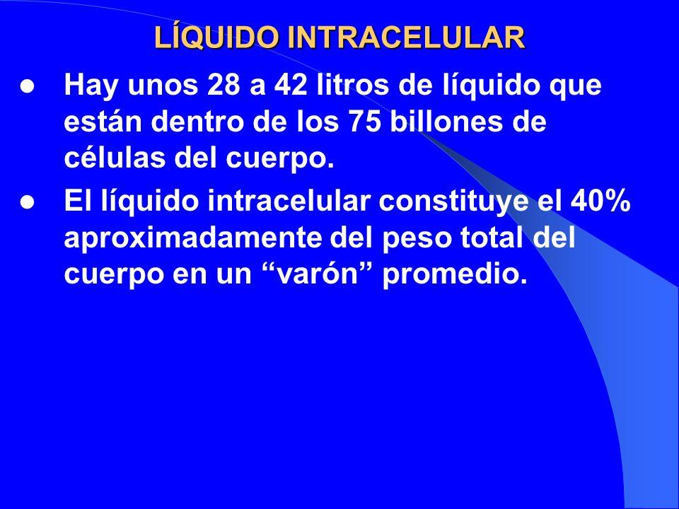 LÍQUIDO INTRACELULAR Hay unos 28 a 42 litros de líquido que están dentro de los 75 billones de células del cuerpo.