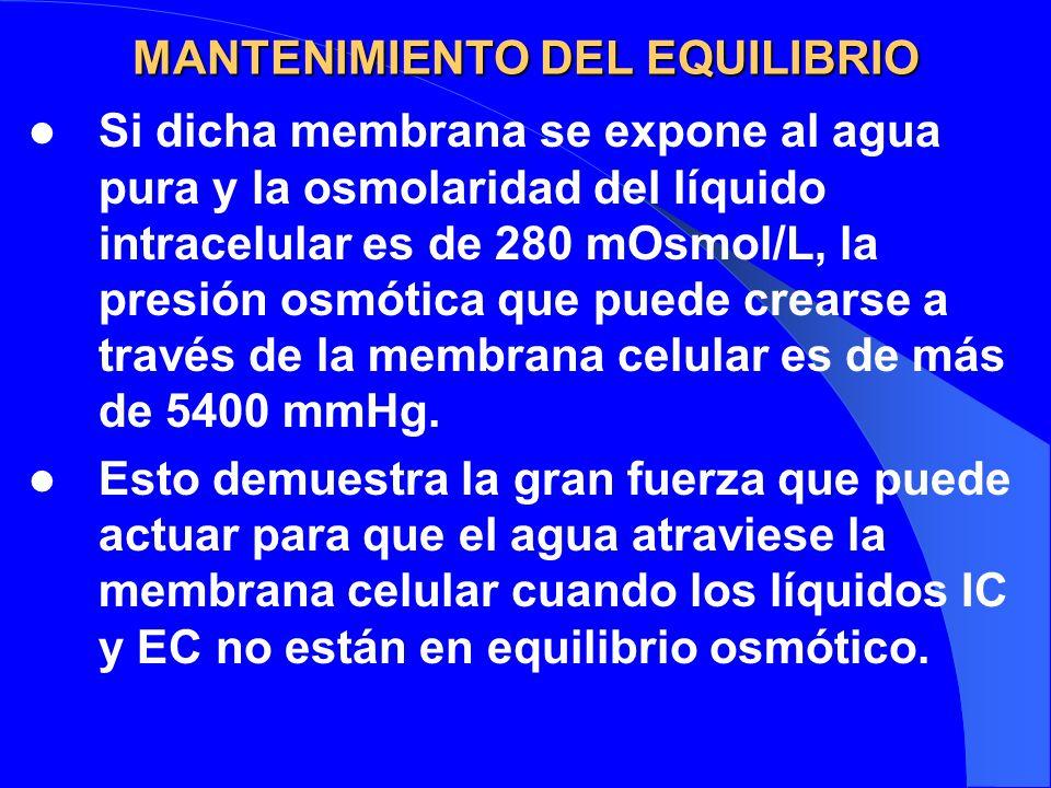 MANTENIMIENTO DEL EQUILIBRIO