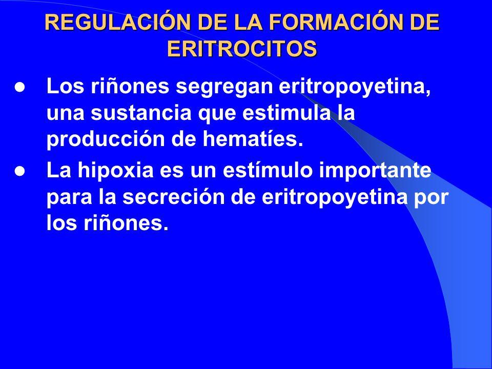 REGULACIÓN DE LA FORMACIÓN DE ERITROCITOS