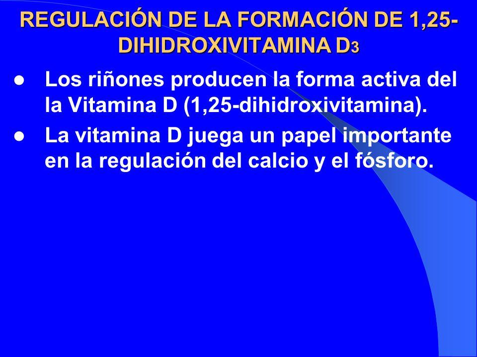 REGULACIÓN DE LA FORMACIÓN DE 1,25-DIHIDROXIVITAMINA D3