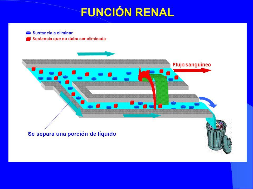 FUNCIÓN RENAL Se separa una porción de líquido Flujo sanguíneo