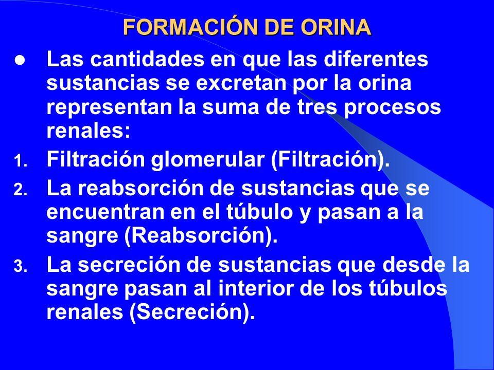 FORMACIÓN DE ORINA Las cantidades en que las diferentes sustancias se excretan por la orina representan la suma de tres procesos renales: