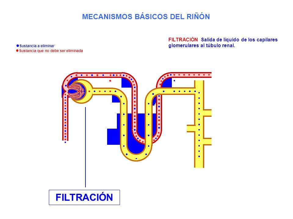 MECANISMOS BÁSICOS DEL RIÑÓN