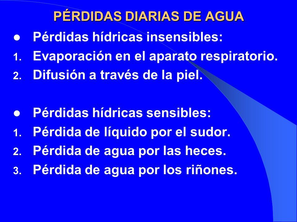 PÉRDIDAS DIARIAS DE AGUA