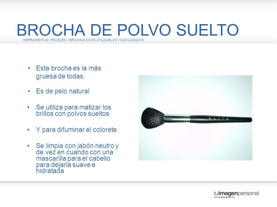 BROCHA DE POLVO SUELTO • Esta brocha es la más gruesa de todas.