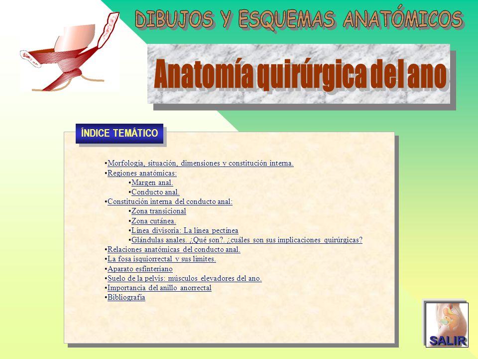 DIBUJOS Y ESQUEMAS ANATÓMICOS Anatomía quirúrgica del ano - ppt ...
