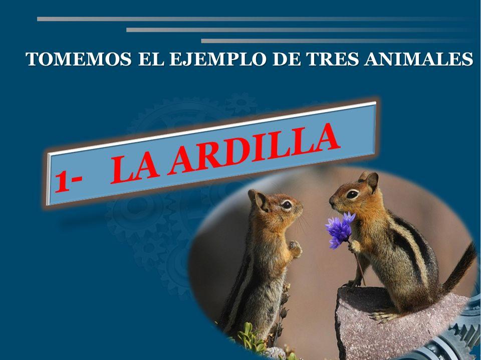 TOMEMOS EL EJEMPLO DE TRES ANIMALES