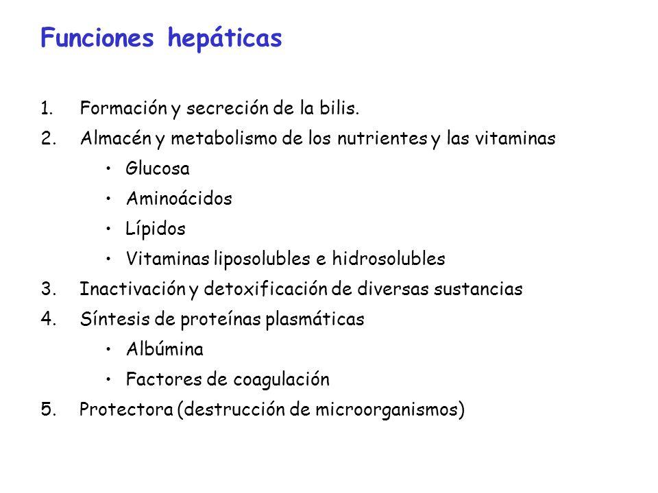 Funciones hepáticas Formación y secreción de la bilis.