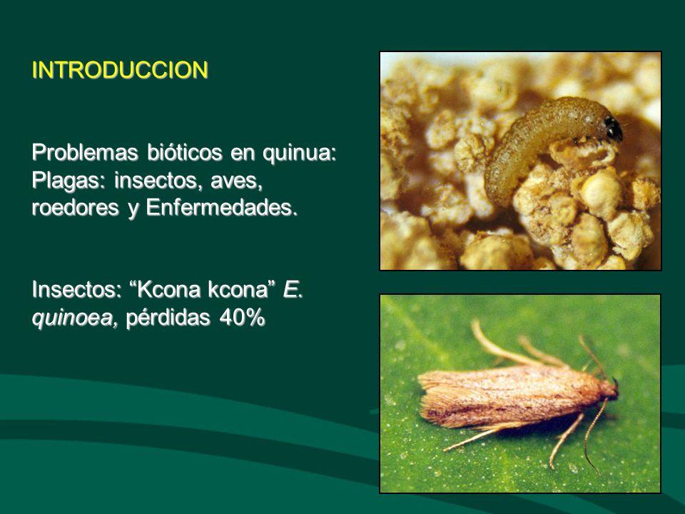 INTRODUCCION Problemas bióticos en quinua: Plagas: insectos, aves, roedores y Enfermedades.