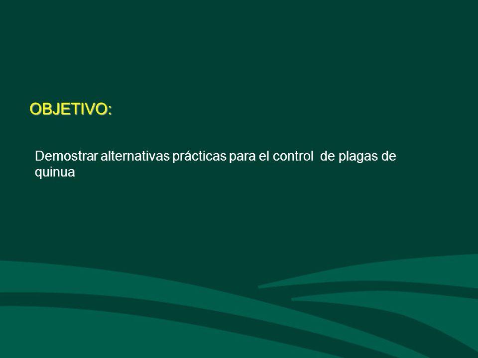 OBJETIVO: Demostrar alternativas prácticas para el control de plagas de quinua