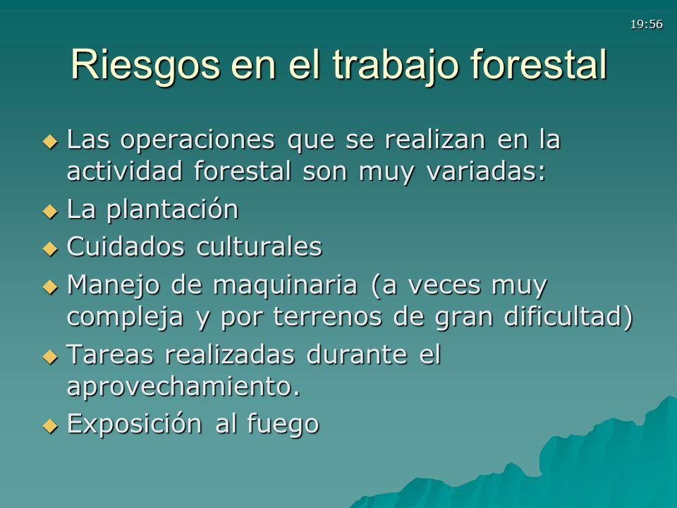 Riesgos en el trabajo forestal
