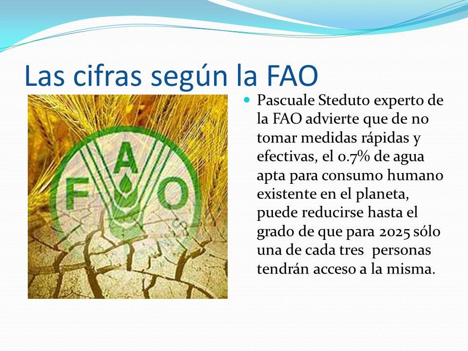 Las cifras según la FAO