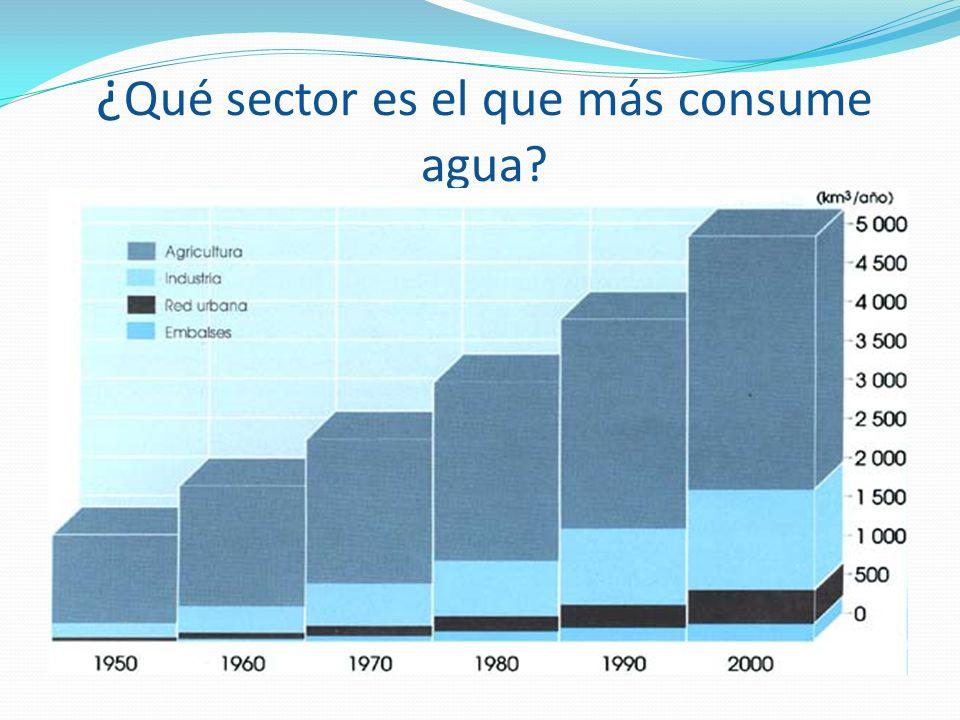 ¿Qué sector es el que más consume agua