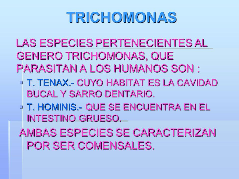 TRICHOMONAS LAS ESPECIES PERTENECIENTES AL GENERO TRICHOMONAS, QUE PARASITAN A LOS HUMANOS SON :