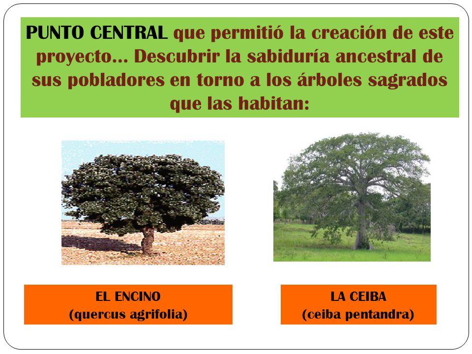 Universidad de ecatepec ppt descargar for Medio en el que habitan los arboles