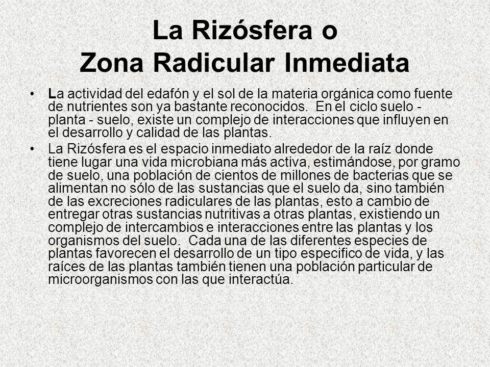 La Rizósfera o Zona Radicular Inmediata