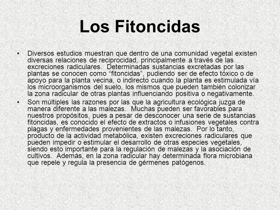 Los Fitoncidas