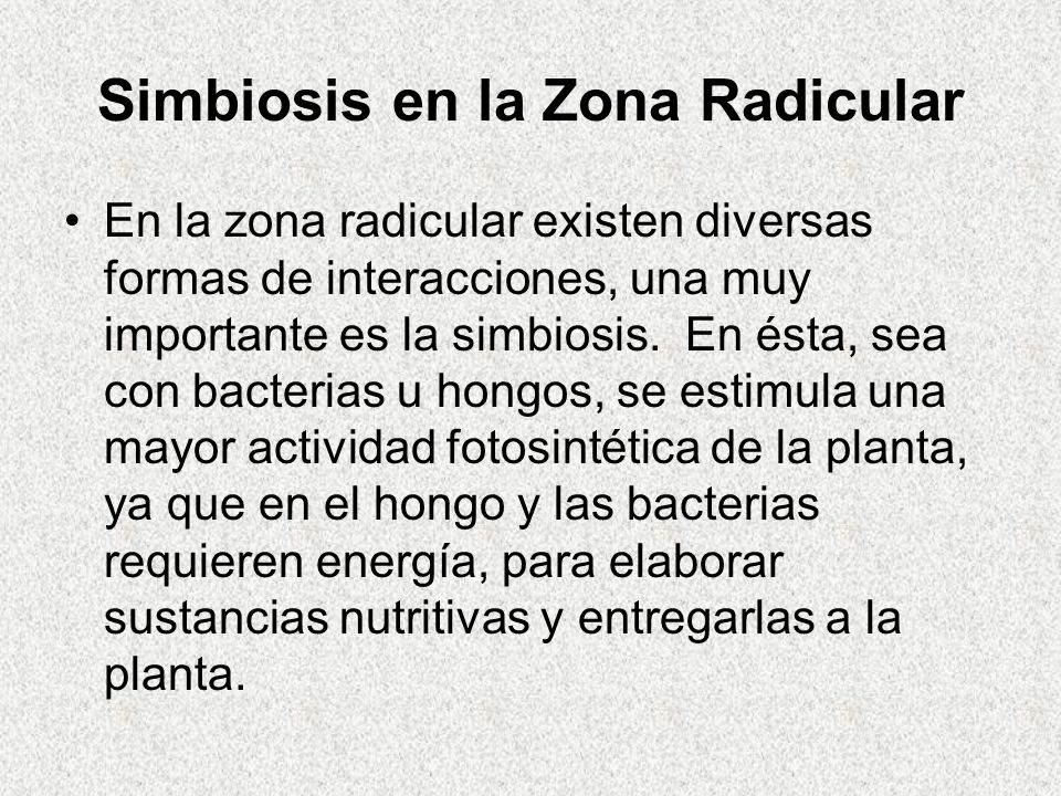 Simbiosis en la Zona Radicular