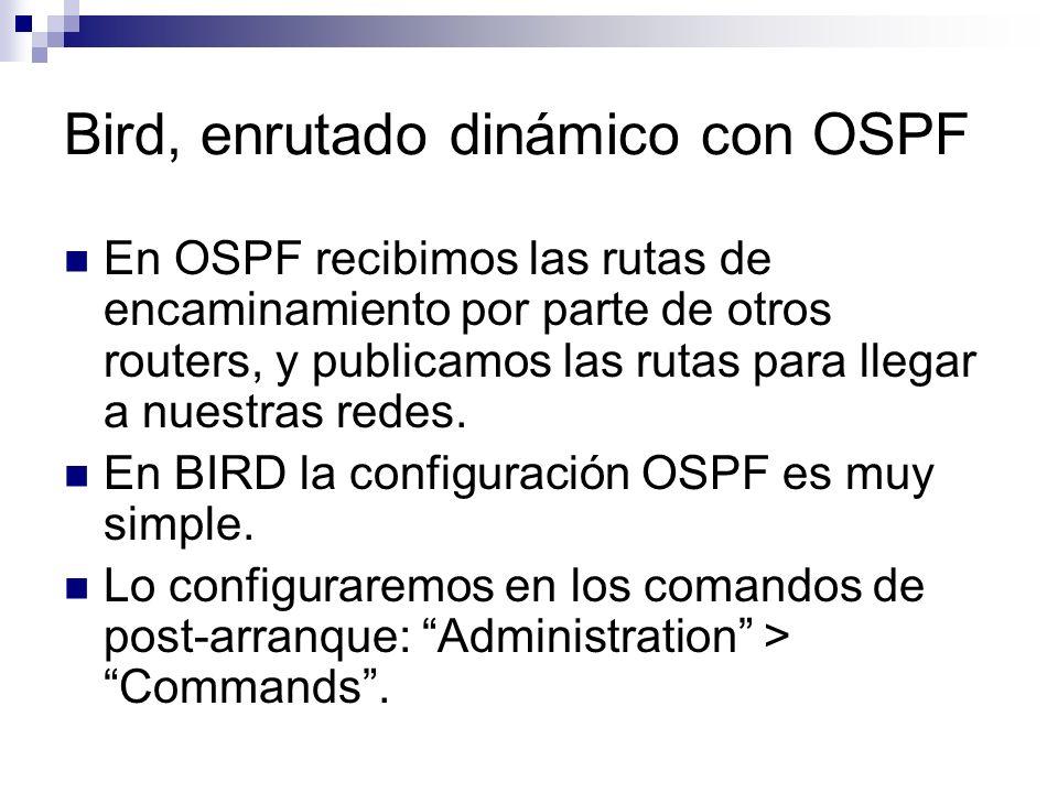 Bird, enrutado dinámico con OSPF