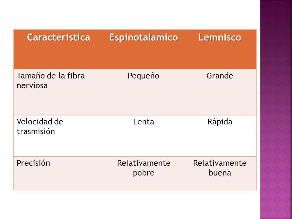 Característica Espinotalamico Lemnisco